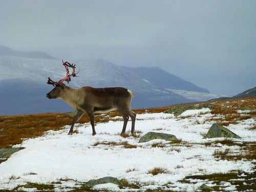 YES! I saw a reindeer !