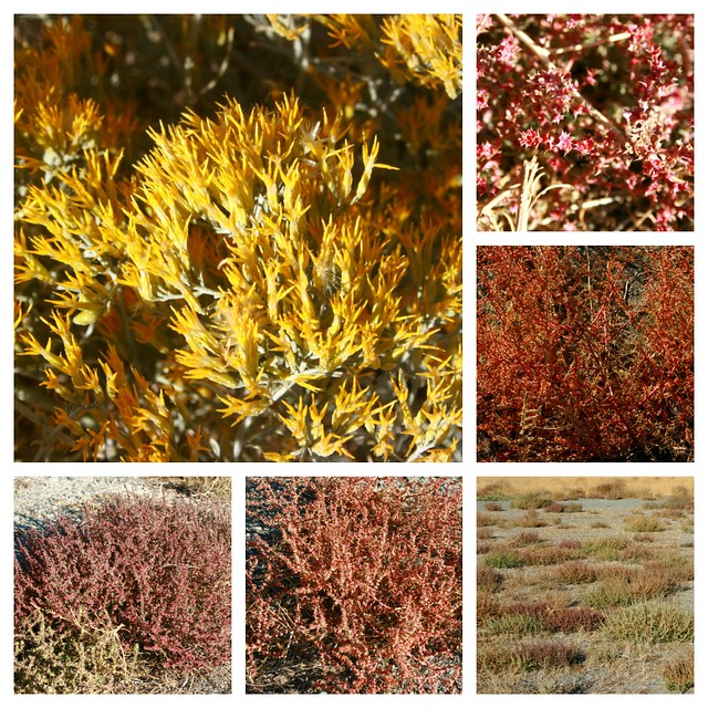 fall weeds collage