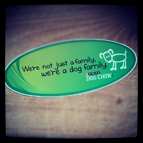 We're not just a family, we're a dog family.  #dogs #dogstagram #dogsofinstagram #instadog #petstagram #love