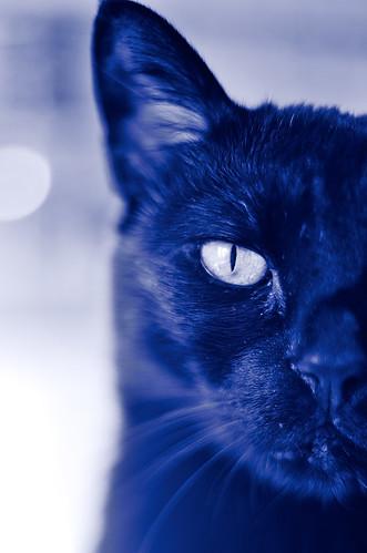 [フリー画像素材] 動物 1, 猫・ネコ ID:201210081000