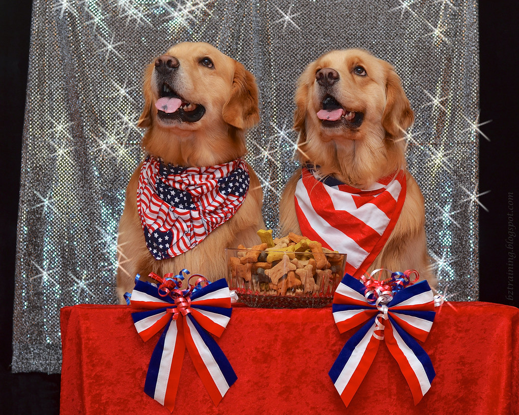 Canine Candidates