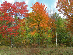 fall color 4.jpg