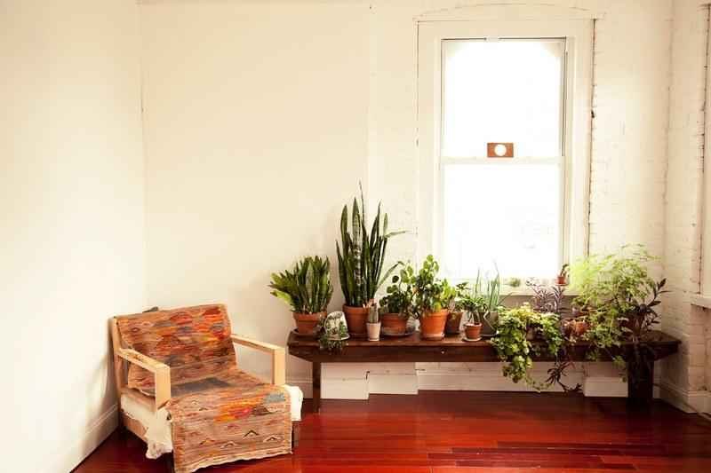 c.m. plants.