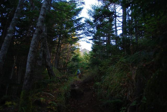樹林帯の奥に見える権現岳