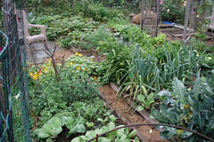 wet fall garden plot 2
