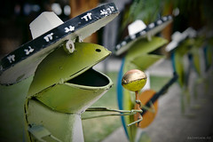 mex-frog