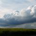 Rape Field & Sky