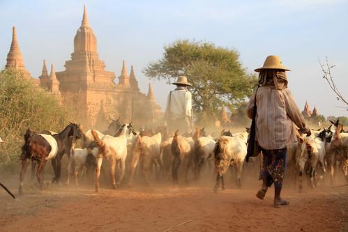 asia burma myanmar bagan rurallife