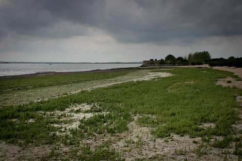 Sea of samphire on our secret island