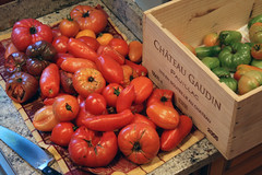 tomatoes 076