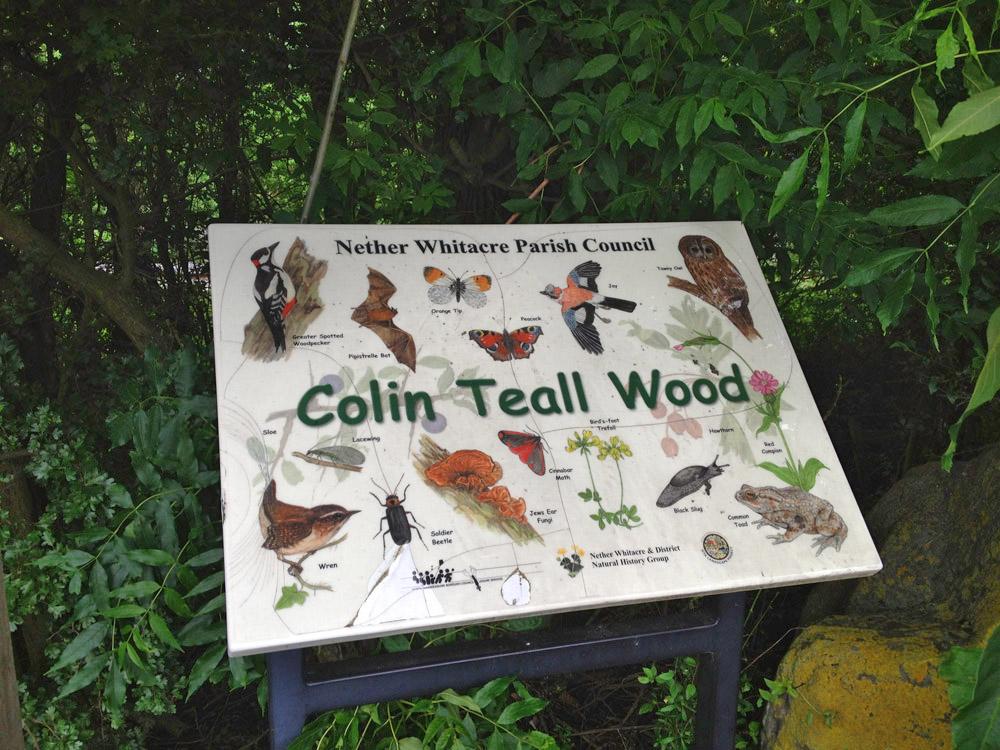 Image result for colin teal wood