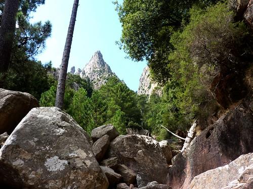 Remontée du haut-Velacu : en vue de Punta Cumpuleddu et du Campanile Sainte-Lucie, le ravin dans la partie forestière
