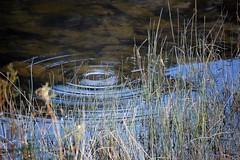Rydal ripples
