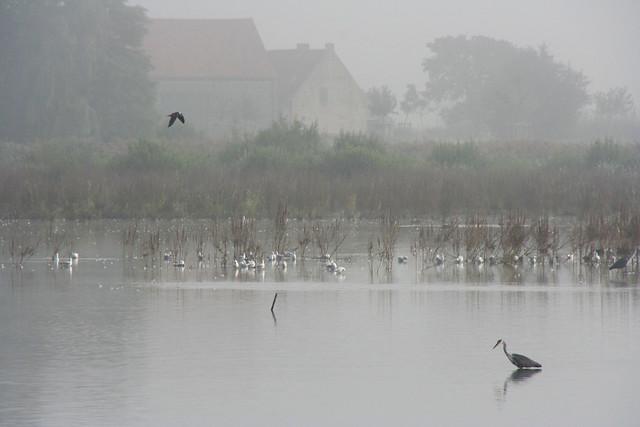 Birds in Bourgoyen