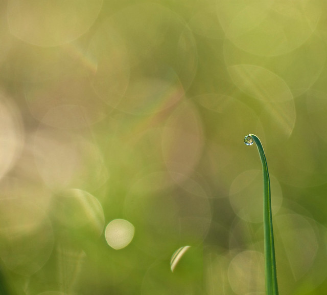 Morning Dew - Beautiful Bokeh Photography