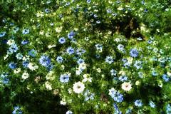 A mass of blooms.