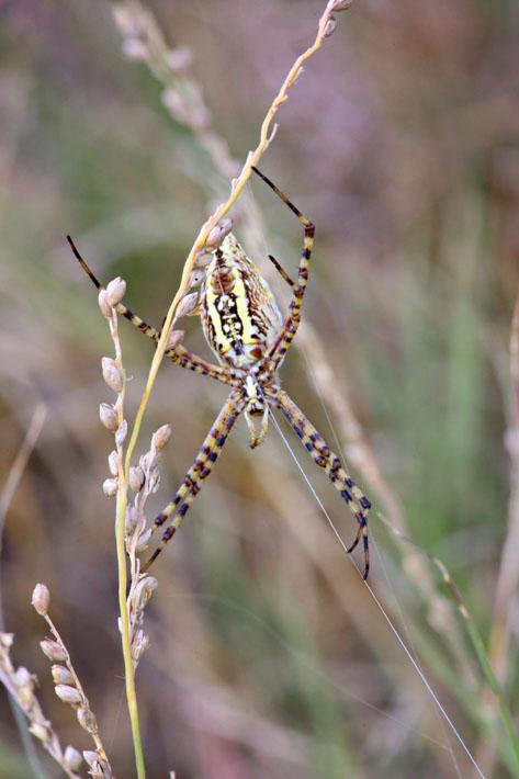 090112_06_bug_spider6