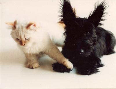 Soto & Angus 3