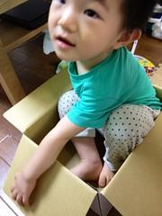 箱入りとらちゃん (2012/9/19)