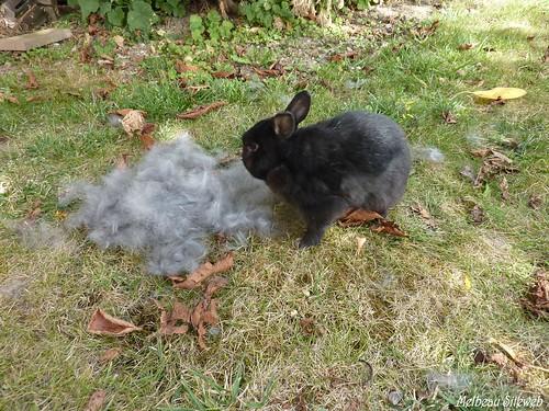Vadrouille le petit lapin & le chien