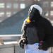 2012-09-22 gorillas-3237