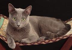 [フリー画像素材] 動物 1, 猫・ネコ ID:201210011000