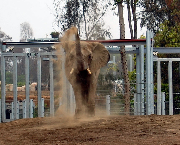 elephant-dust - san diego zoo coupons