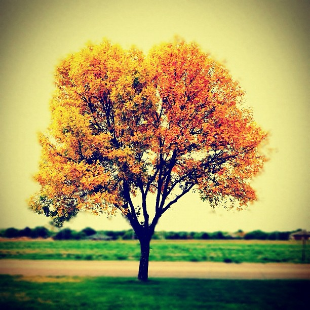 there is a season, turn turn turn #autumn #shuttersisters  #instamuse #instagood