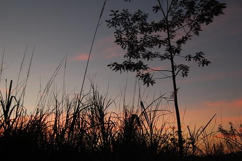 shadow orange grass sunrise