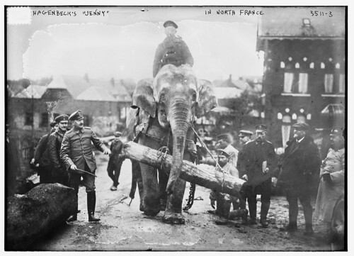 "Hagenbeck's ""Jenny"" in North France  (LOC) by The Library of Congress"