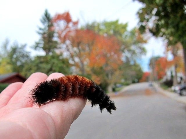 caterpillar stretch