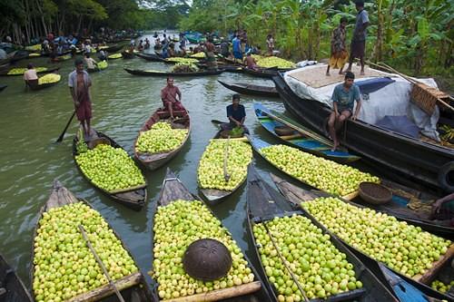 Floating Guava market. Jhalokathi