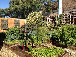 Big Delicious Planet urban garden