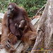 Orangutan World, Tanjung Puting Borneo Adventure-256.jpg