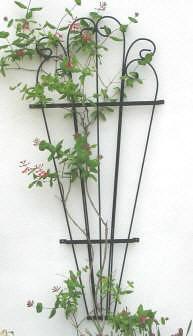 tu thiet ke gian cho hoa hong leo (4)