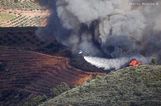 Wildfire - 4