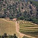 Chianti antique terraced hillsides covered with grapevines