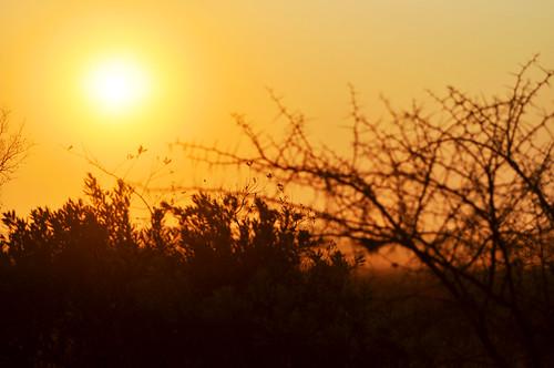africa morning sun sunrise southafrica dawn sabi krugerpark kruger savanna gamedrive gamereserve sabisand inyati inyatigamereserve