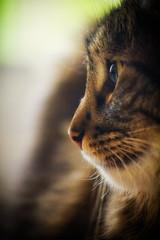 [フリー画像素材] 動物 1, 猫・ネコ ID:201209151000