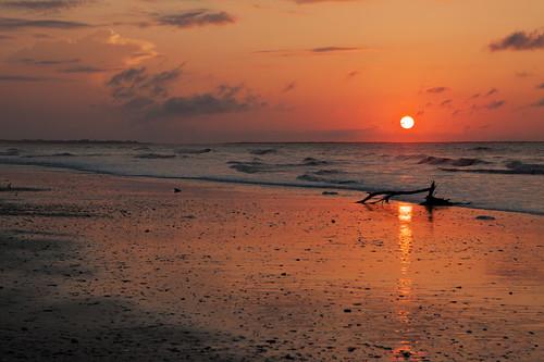 beach landscapes botanybay scenics edistoisland explored acebasin
