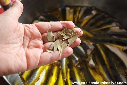 Sardinas en aceite (9)