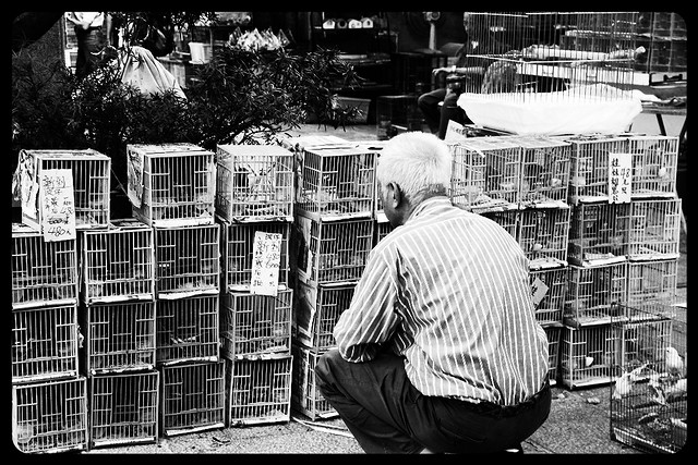 Old Man in Bird Street Hong Kong