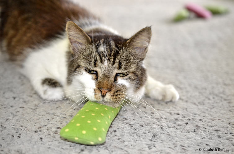 Kitty cat resting his chin on a catnip cigar, by Elizabeth Ruffing