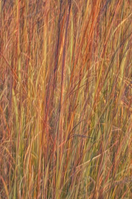 Late Autumn in the Prairie - Hidden Colors