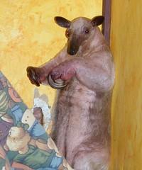 I am a meerkat