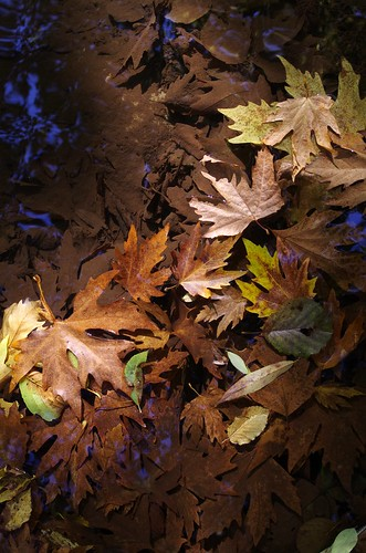 sonbahar 2012 by yılmaz ürgün