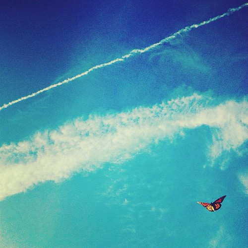 #butterfly #inflight #3 #iphoneography