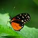 Butterfly by Erwin_L