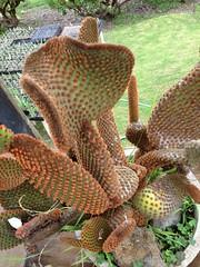 Unique Cactus - 1