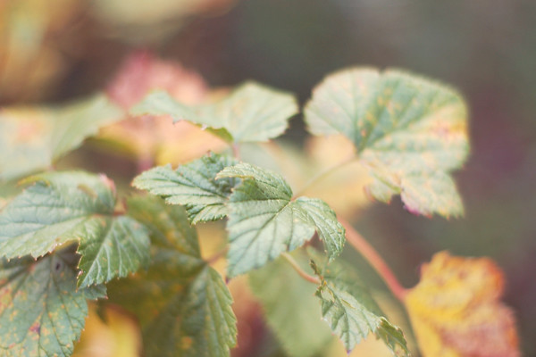 wardrobeblock : photography leaves leaf depth of field dof autumn